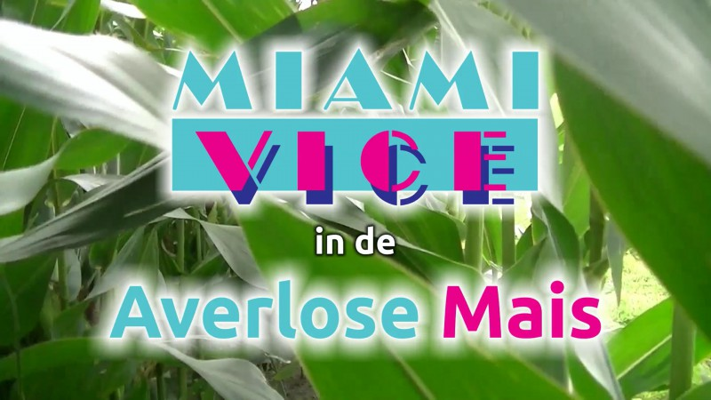 | Miami Vice in de Averlose Mais